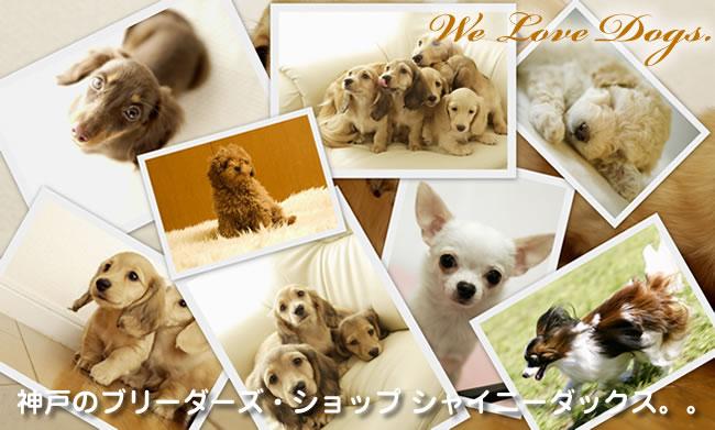 大阪・神戸から全国へ可愛いペットを販売